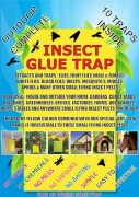 Insect Glue Traps